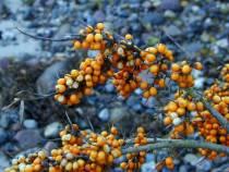 Herbstliche Bilder